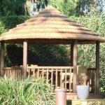 African Thatch1